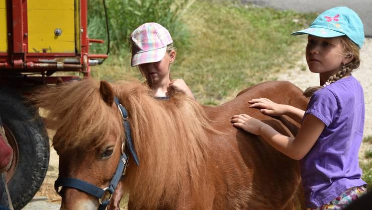 Es gab viele Streicheleinheiten für die Ponys