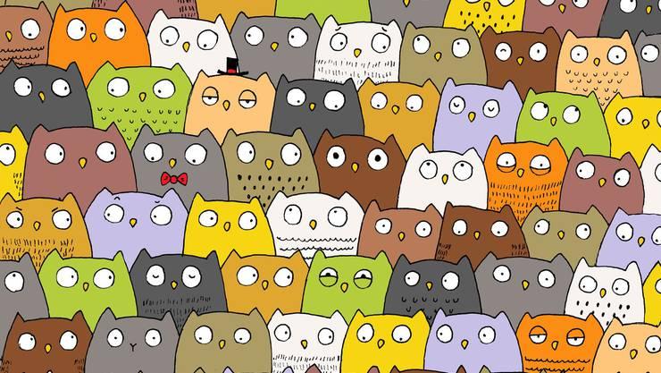 Wo ist die Katze wo?