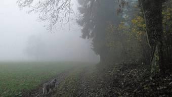 Spaziergang im Nebel: Wie im schwedischen Krimi.