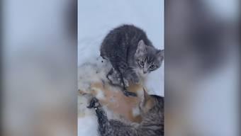 Mann rettet Kätzchen dank Thermos-Kaffee