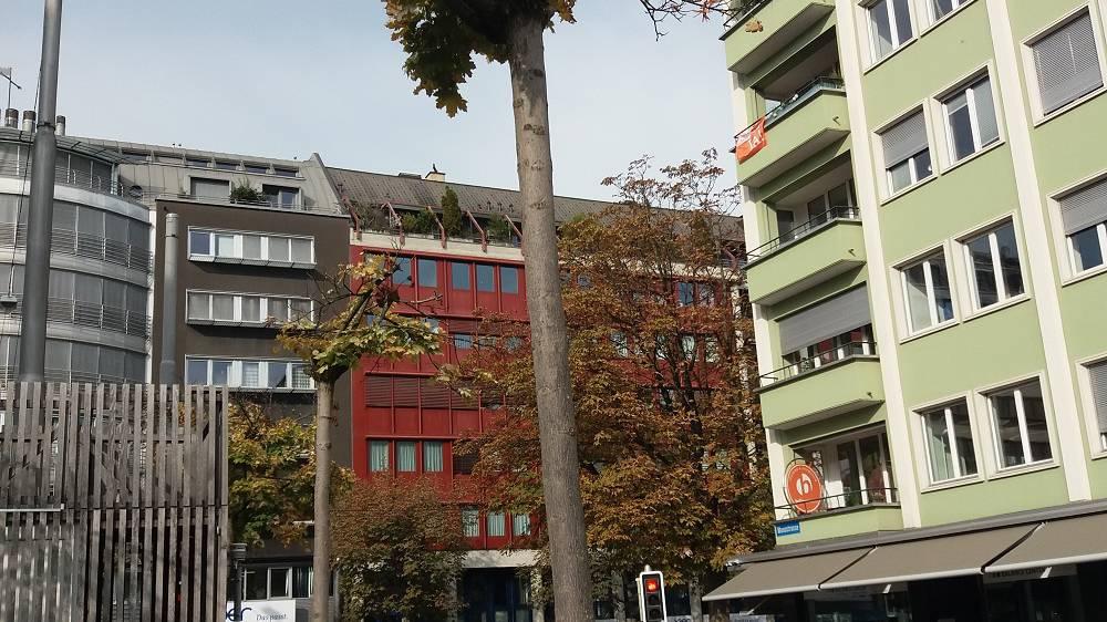 Stadt Luzern fällt 105 Bäume