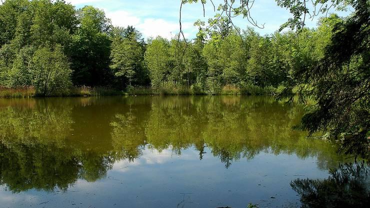 Das Naturschutzgebiet Torfmoos in Niederrohrdorf wird mit einemProjekt des Kantons aufgewertet.zvg