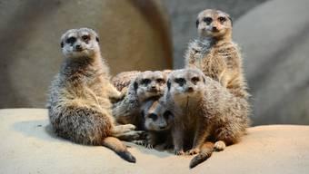 Der Zoo Basel hat einen deutlichen Rückgang bei den Besuchern zu verzeichnen.