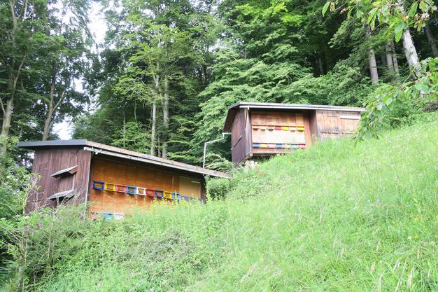 Versteckt im Wald oberhalb Birmensdorfs: Die Bienenhäuser von Landikon