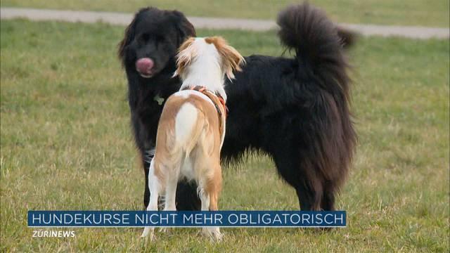 Obligatorische Hundekurse werden abgeschafft