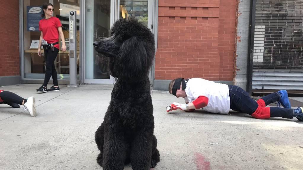 Rund 140 Menschen krabbelten für ein Kunstprojekt mit verbundenen Augen und Knieschonern auf Trottoirs durch New York.