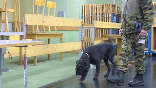 Diensthunde zeigen ihr Können