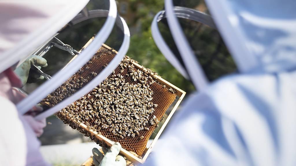 Die Schweizer Imkerinnen und Imker haben in diesem Jahr in der Schweiz eine gute Ernte einfahren können. (Archivbild)