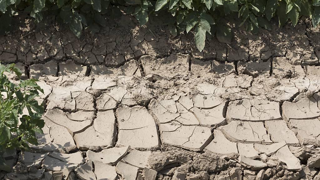 Zunehmende Trockenheit bedeutet für die Lebensmittelproduzenten, dass sie umdenken müssen. (Symbolbild)