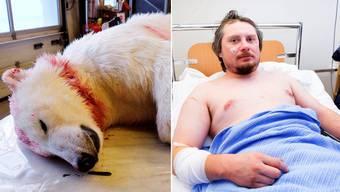 Tier tot, Mensch verletzt: Eisbär dringt in Zelt ein und greift Touristen an