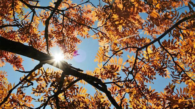 Temperatursturz: Es stehen kühle Herbsttage bevor