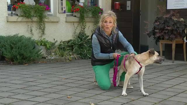 Aus dem Tierheim des Aargauischen Tierschutzvereins Ats in Untersiggenthal