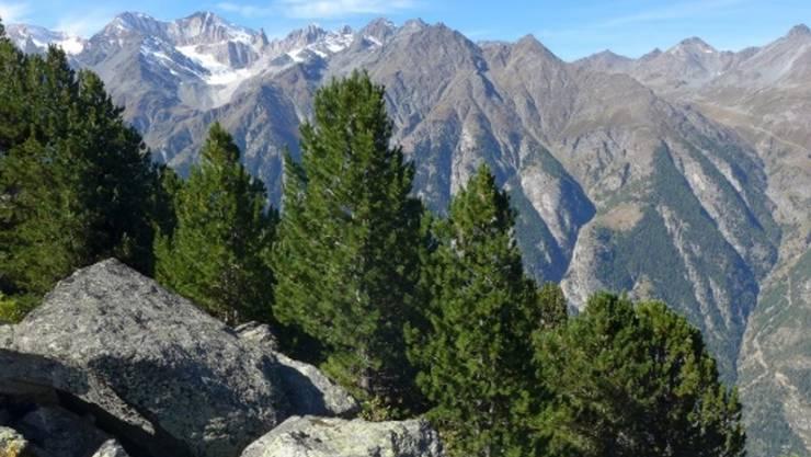 Wald bei St. Niklaus (VS). Eines von ca 30'000 Fotos, die das Landesforstinventar LFI am Donnerstag online gestellt hat. (LFI)