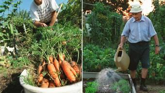 Was im Garten geerntet wird, muss ab heute versteuert werden.
