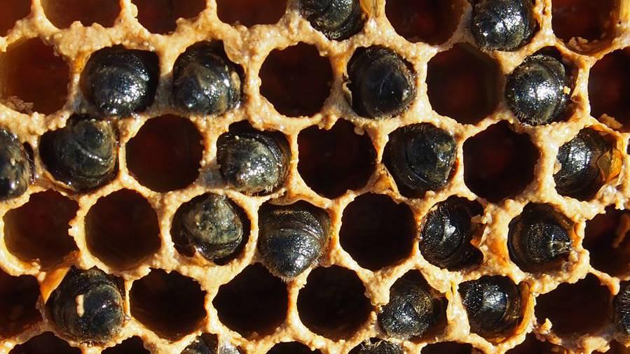 Vandalen haben einen Bienenkasten zerstört – rund 30'000 Bienen gestorben