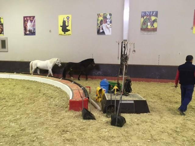Ponys bekommen ihren Auslauf