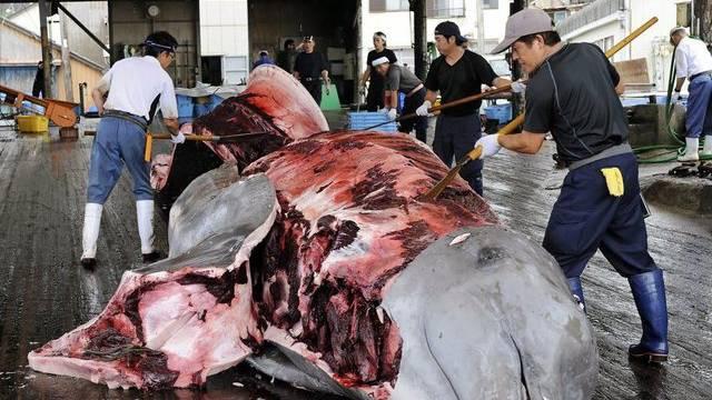 Japanische Fischer häuten einen erbeuteten Wal (Archiv)