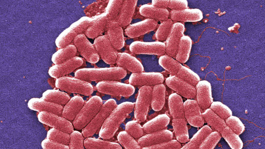 Im französischen Rohmilchkäse «Reblochon de Savoie Fermier le grand Bornand» wurden Bakterien nachgewiesen, die Magen-Darm-Erkrankungen und in schweren Fällen zu dauerhaften Nierenschädigungen führen können. (Symbolbild)