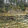 Holzgehege statt des bisher üblichen Jungwuchsschutzes aus Plastik sollen den neu aufgeforsteten Wald schützen.