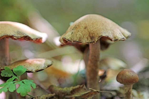 Breitenbach - überall hetts Pilzli draa... der Herbst naht!