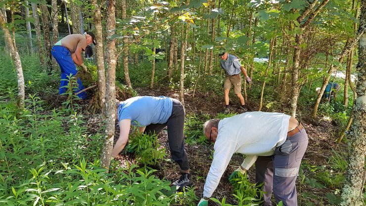 Der Waldboden hat wieder Platz für einheimische Pflanzen