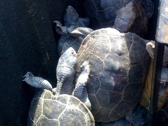 ... Schildkröten