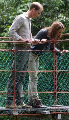 William und Kate im Regenwald von Borneo