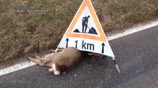 Auch Wildtiere sind von der Zeitumstellung betroffen