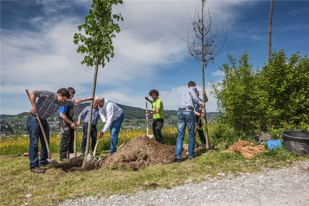 Vertreter von aargauSüd und der Projektgruppe pflanzen ein Baumpaar, eine Linde und eine Eiche. psi