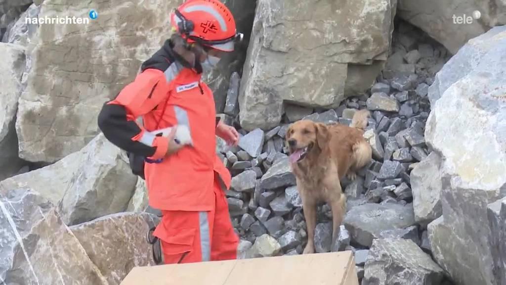 Ausbildung der Rettungshunde Redog
