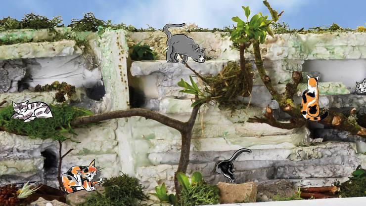 Illustration der Katzenanlage