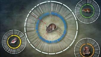 Anhand der Lücken und aufgefüllten Stellen im Genom lassen sich evolutionäre Veränderungen erklären.