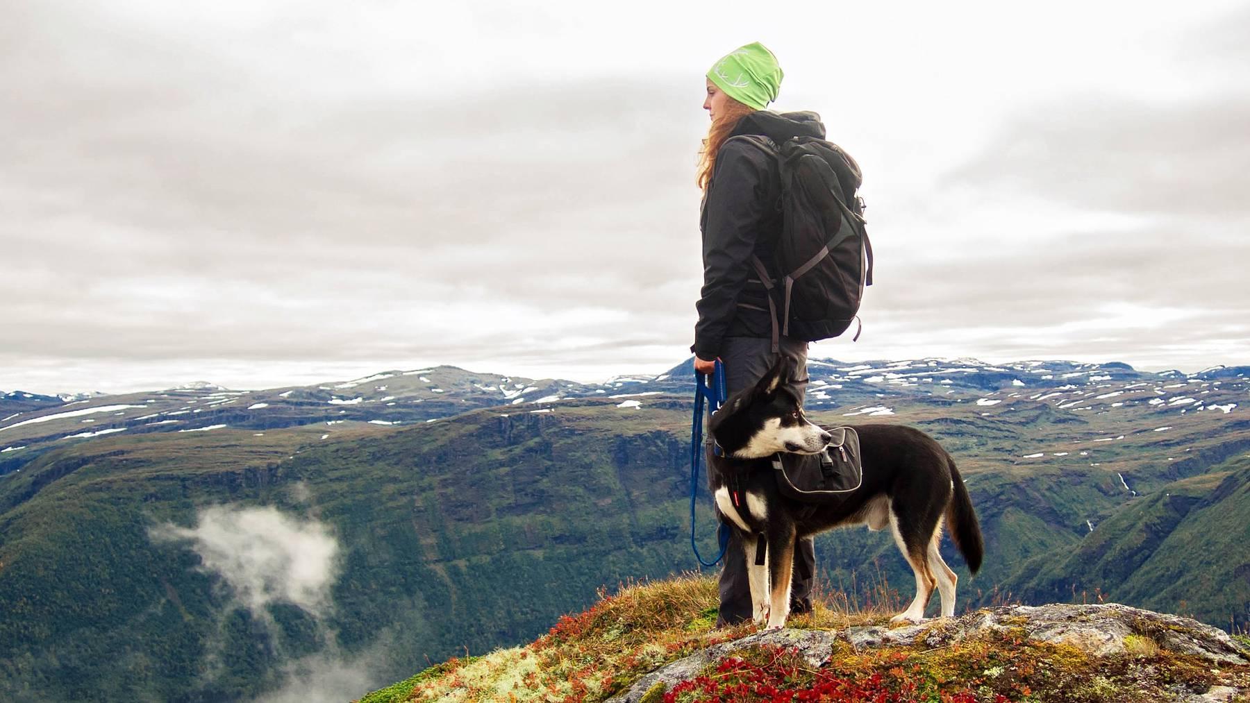 Trifft man beim Wandern auf Tiere, muss man gewisse Dinge beachten.