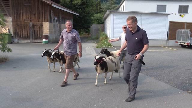 Christoph Neuhaus' Schafe dürfen jetzt beim Nachbarn grasen
