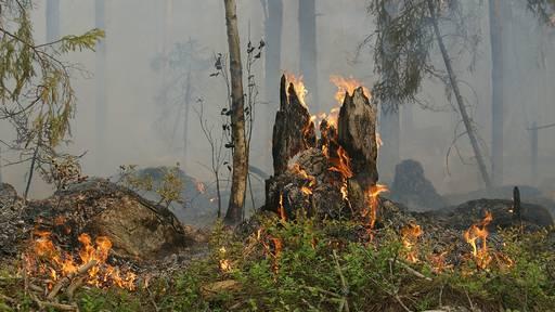 Waldbrandgefahr jetzt auf Stufe 3 erhöht