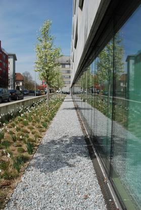 Laut Tobias Liechti eine vorbildliche Bepflanzung - Birnbäume und Osterglocken vor dem Bezirksgebäude