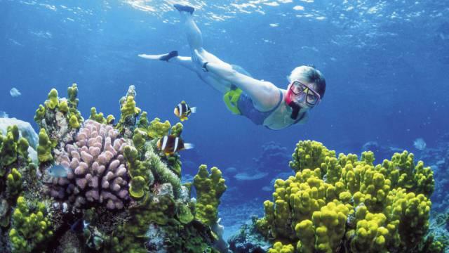Soll besser geschützt werden: Great Barrier Reef (Archiv)
