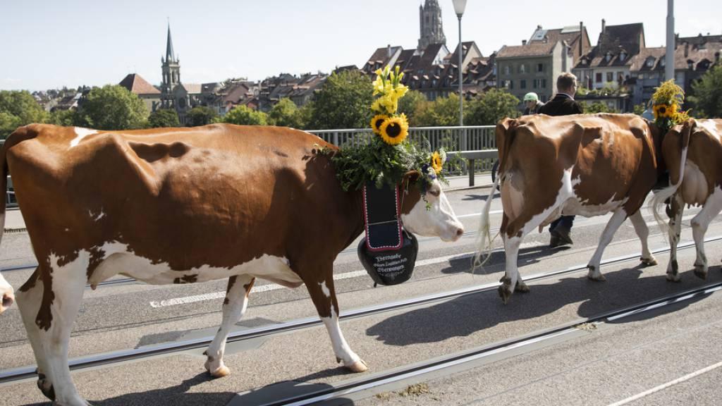 Berner Bauern machen mit «Sichlete» auf sich aufmerksam