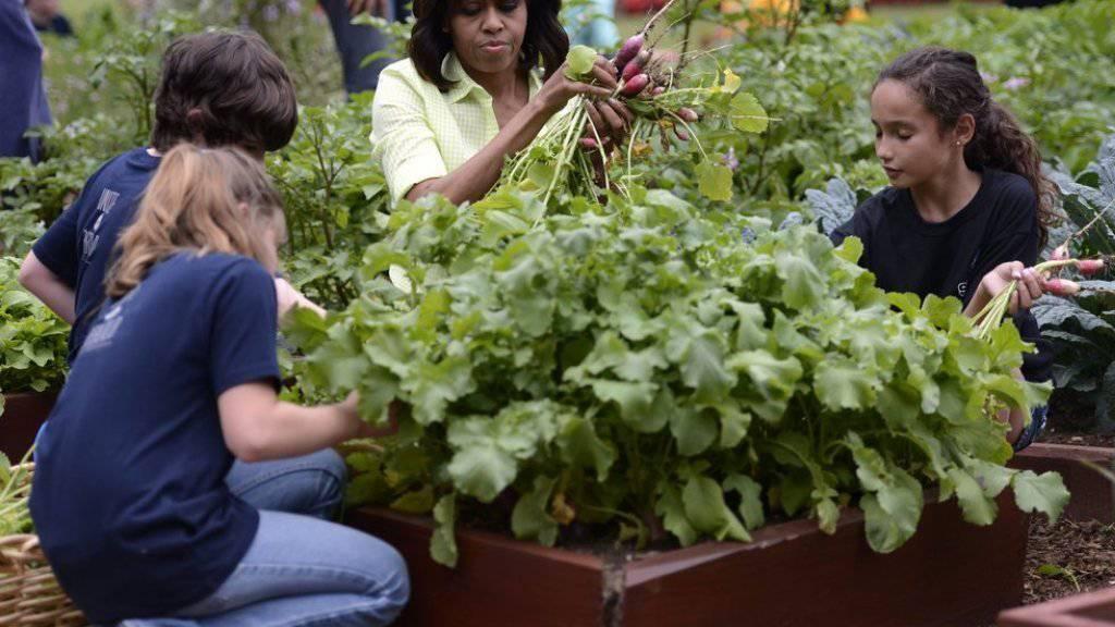 First Lady Michelle Obama 2013 bei der Ernte. Nächste Woche wird dieses Vergnügen der spanischen Königin Letizia zuteil (Archiv).