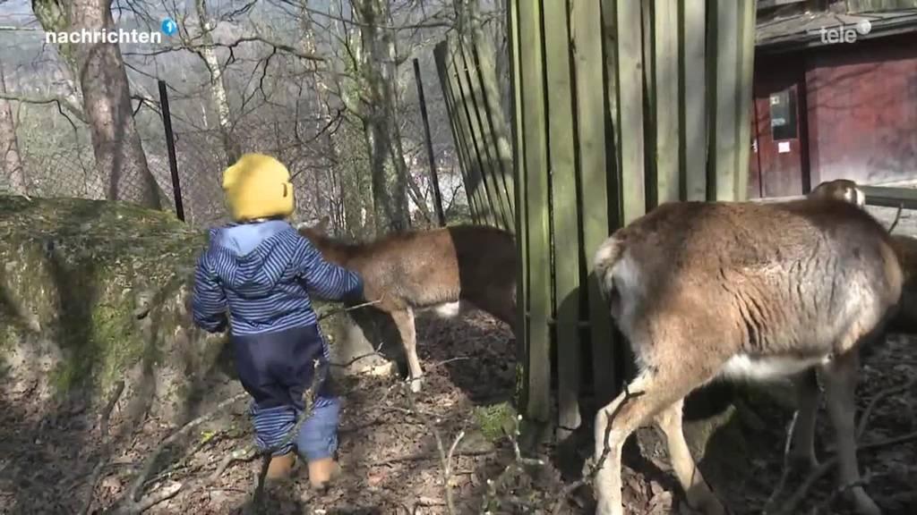 So hat sich der Tierpark Goldau auf die Öffnung vorbereitet