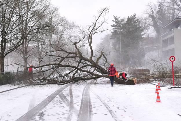 Rasch müssen die Forstarbeiter die Baumteile zerlegen, denn schon bringt der Helikopter die nächste Ladung.