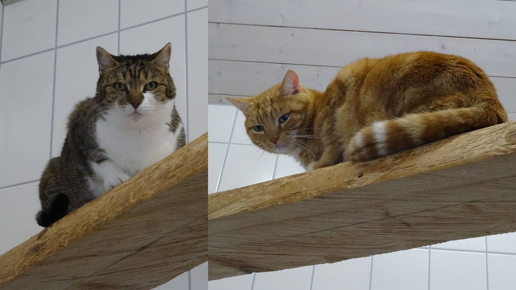 Schätzi und Rosso