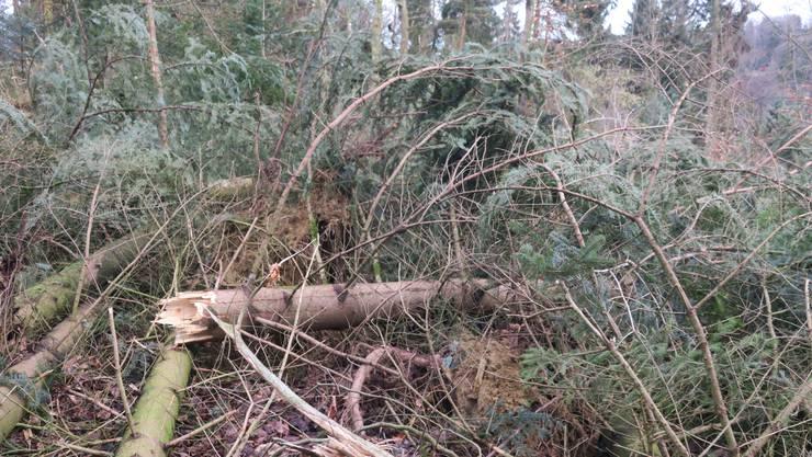 Keine Auswirkung Auf Holzpreis Ostschweizer Kantone Nur Wenig Von