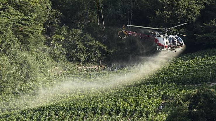 Pestizide in der Landwirtschaft - wie hier ein Mittel gegen Pilzbefall der Reben – haben verheerende Folgen für die Tierwelt.