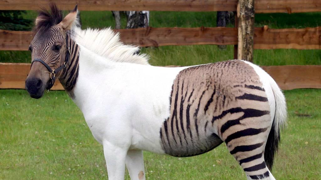 Diese Tierhybride musst du gesehen haben!