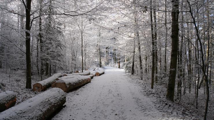 Winterlicher Wald als Heimat (Foto: RW)