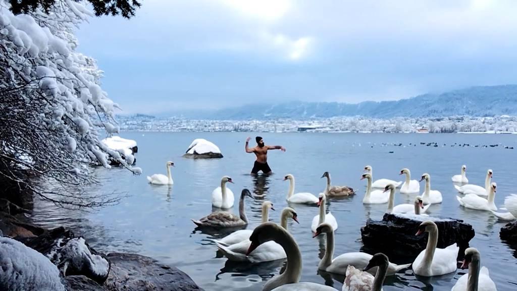 Das steckt hinter dem «Schwanentanz» im Zürichsee