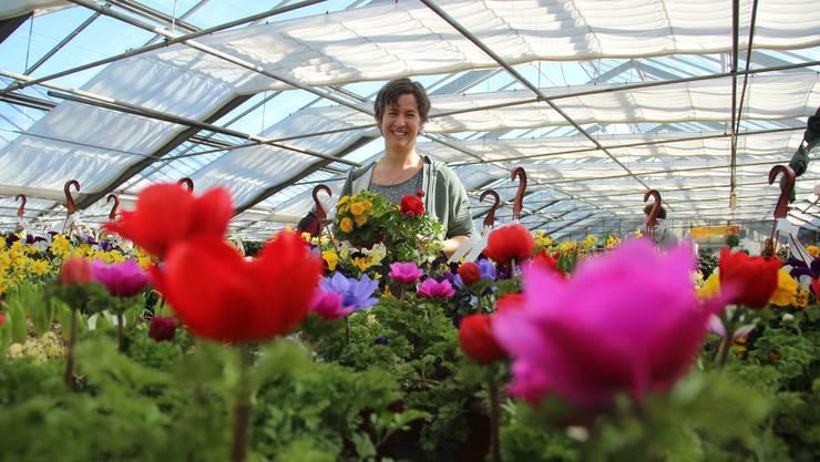 Denise Bieri von der Gärtnerei Gisler in Niederwil zeigt die bunte          Pracht, die sich die Leute in Haus und Garten holen, sobald die Tage wärmer und vor allem heller werden.