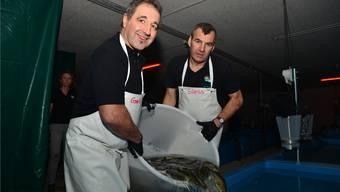 Renato Gsell (links) und Stefan Süess schütten ihre 9000 Zander zuberweise ins Zuchtbecken im Dintiker Industriegebiet.
