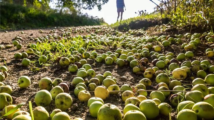 Aus Äpfeln kann man Kohlenstoff gewinnen, und den kann man brauchen für die Elektroden von Batterien – zum Beispiel solchen mit Na-Ionen. Frank Rumpenhorst/DPA/Key